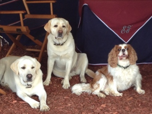 Skyland Dogs