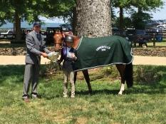 Large Pony Champion Blue A Kiss