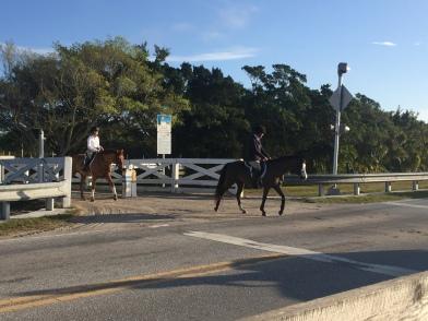Horse Show Bound